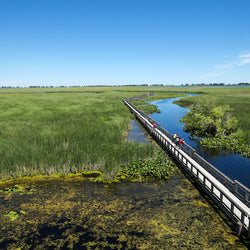 Marsh Boardwalk in Point Pelee National Park Ontario Canada