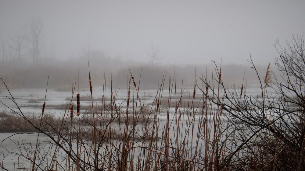 Marshes on a Foggy Morning in Illinois Beach State Park