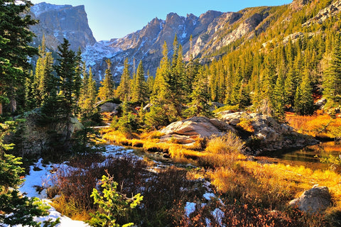 Mountains behind colorful forest during fall in Rocky Mountain National Park