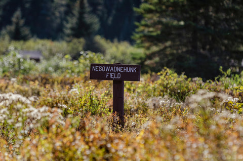 Nesowadnehunk Field campground sign in Baxter State Park