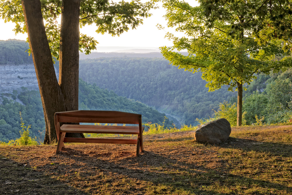 Park bench overlooking valley of trees during sunset in Letchworth State Park New York