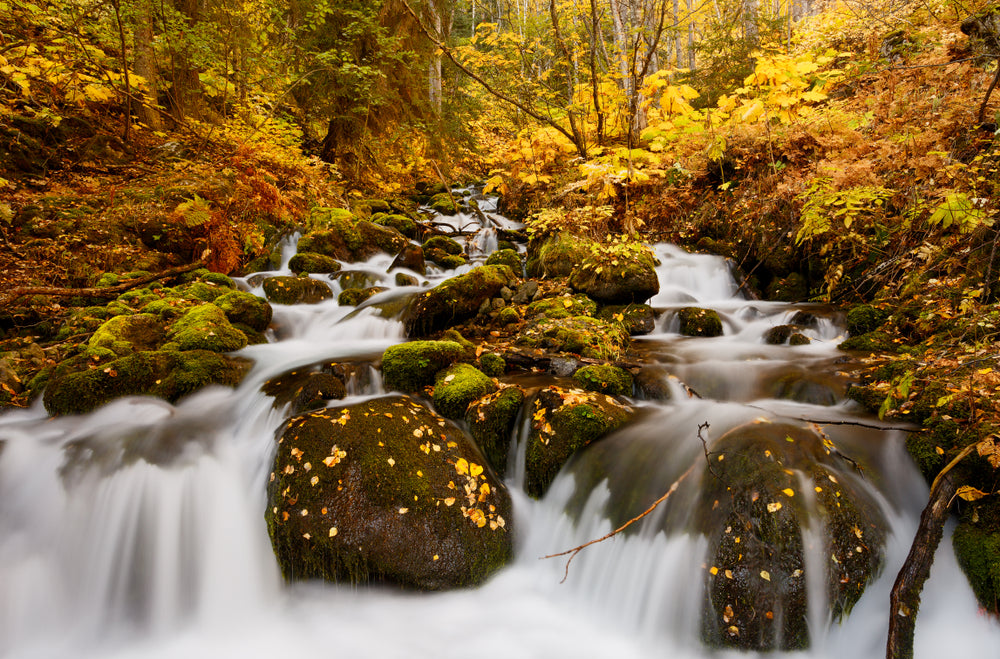 River running down rocks through autumn colored forest foliage in Chugach State Park