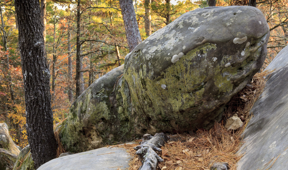 Rocks in Autumn Time in Robbers Cave State Park Oklahoma