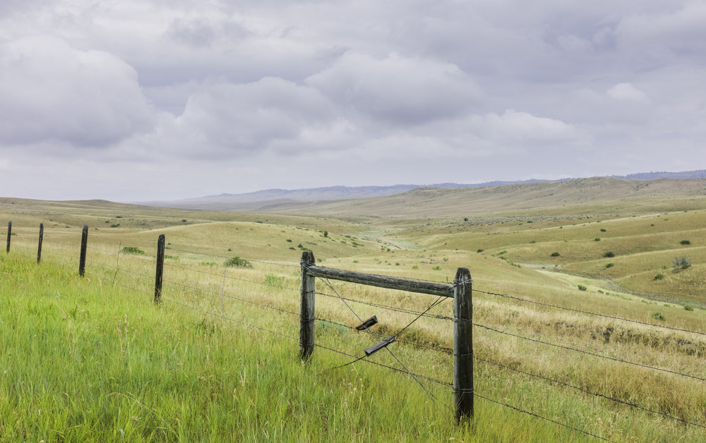 Rolling Landscape of Prairie With Wire Fencing Billings Montana