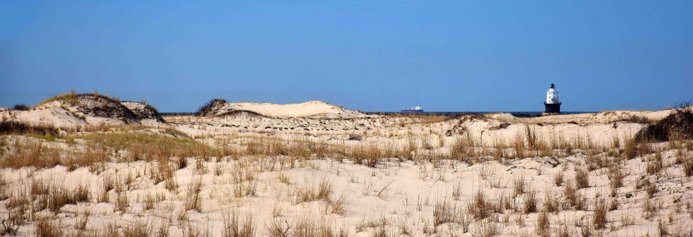 Sand Dunes and Beach Grass With Lighthouse in Background at Cape Henlopen State Park Delaware