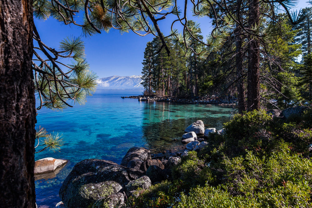 Shore of Lake Tahoe With Pine Trees at Lake Tahoe Nevada State Park Nevada
