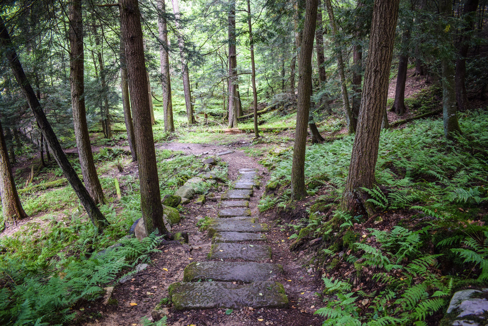 Stone Hiking Trail in Cook Forest State Park Pennsylvania