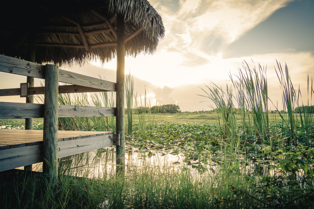 Sunrise View of Wooden Dock in Everglades National Park Florida