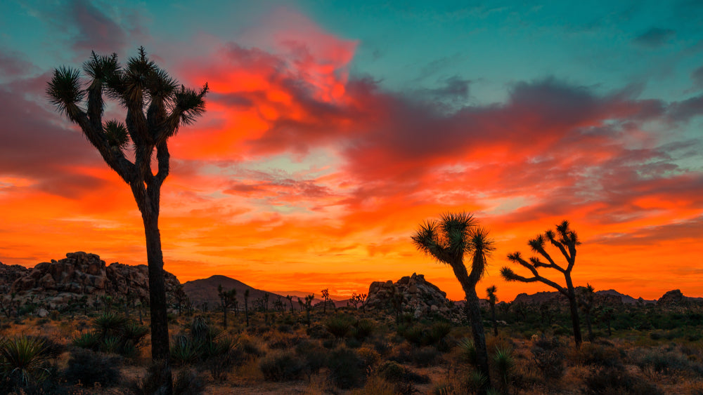 Sunset View of Desert in Joshua Tree National Park California