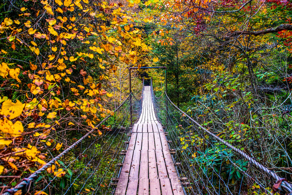 View Down Hiking Bridge Through Forest in Fall Creek Falls State Park