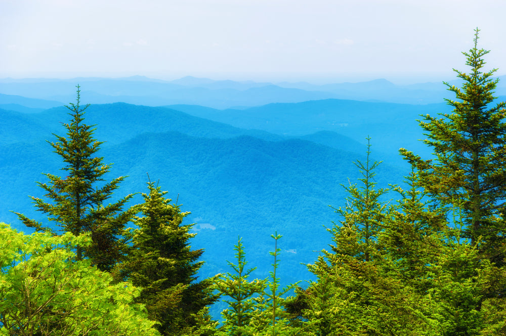 View From Top of Roan Mountain at Roan Mountain State Park Tennessee