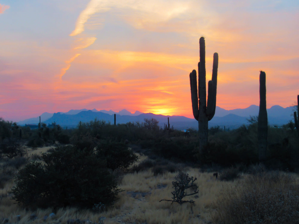 View of Beautiful Sunset with Cactus Fields in Lost Dutchman State Park Arizona