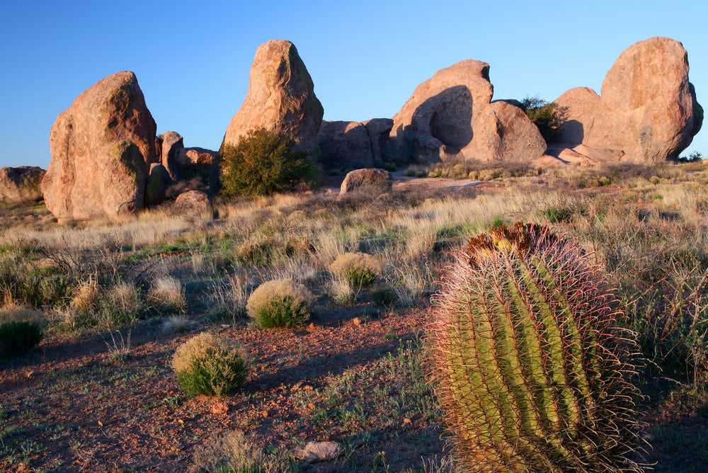 View of Boulders and Cactus in City of Rocks State Park New Mexico