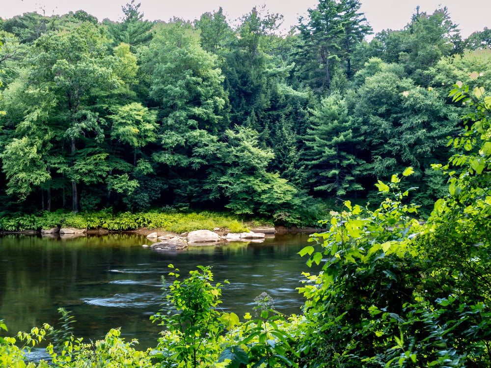 View of Clarion River in cook Forest State Park Pennsylvania