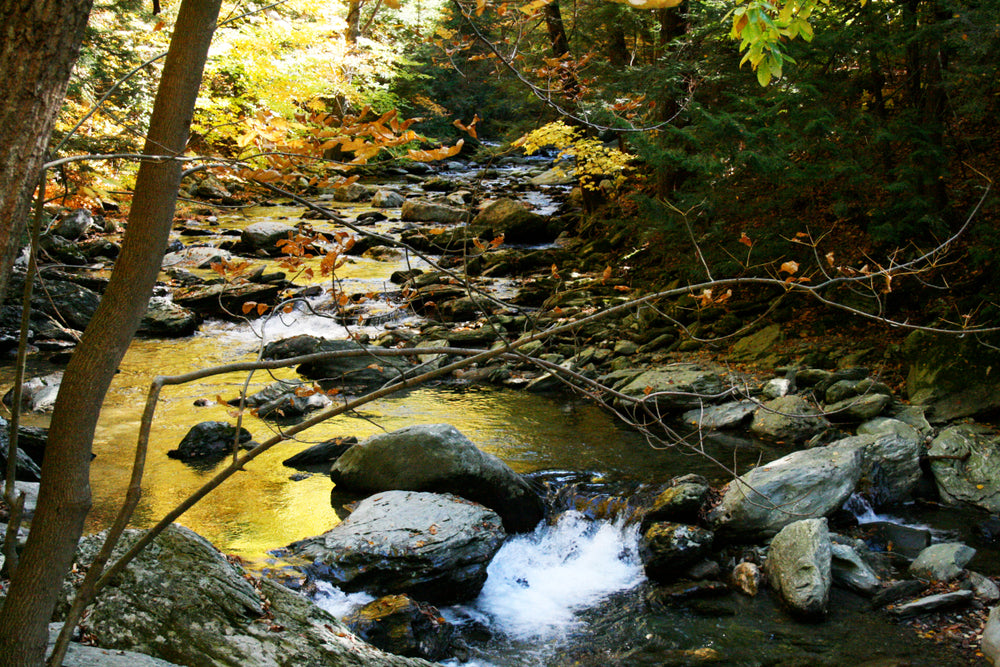 View of Creek in Autumn in Bash Bish Falls State Park Massachusetts