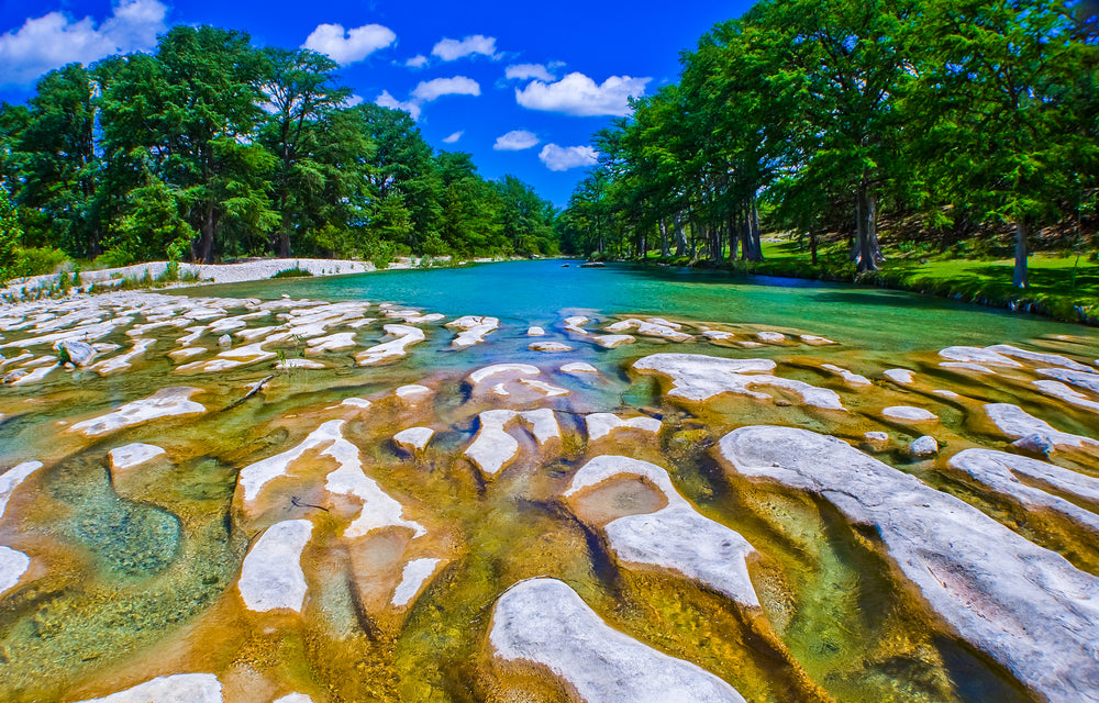 View of Cypress Trees in Garner State Park Texas