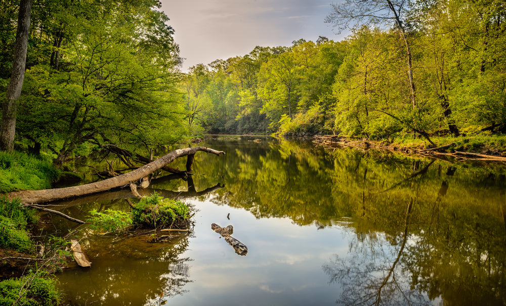 View of Eno River During Summer With Trees Eno River State Park