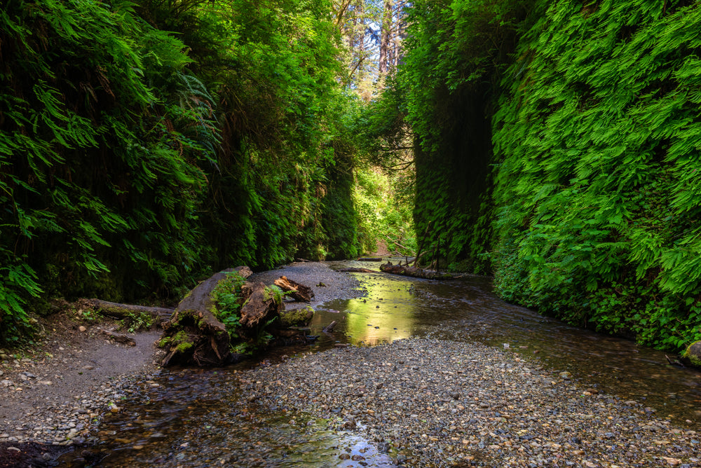 View of Fern Canyon in Prairie Creed Redwood State Park