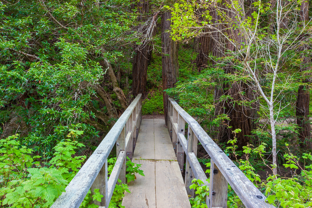 View of Foot Bridge in Middle of Big Sur Forest Julia Pfeiffer Burns State Park