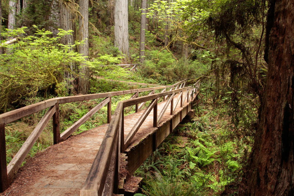 View of Footbridge James Irvine Trail Prairie Creek Redwoods State Park California