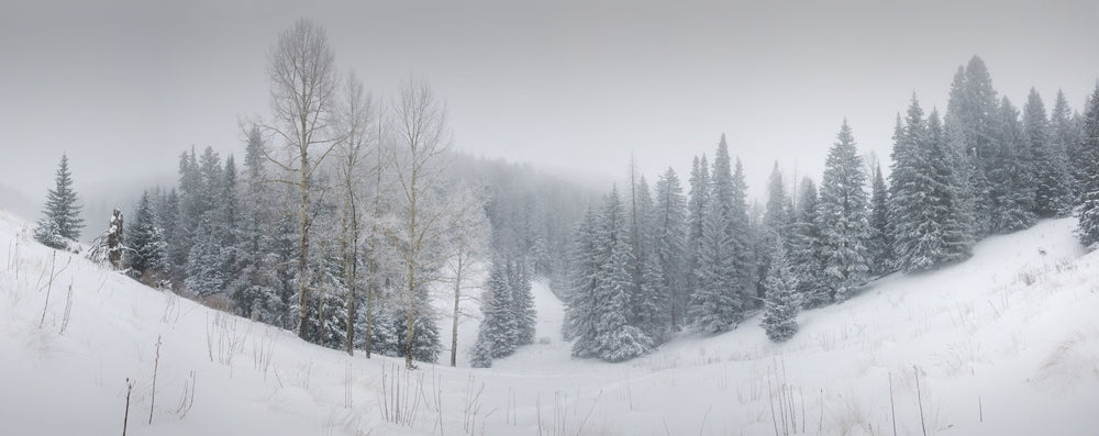 View of Forest Winter Scene at Ruidoso New Mexico