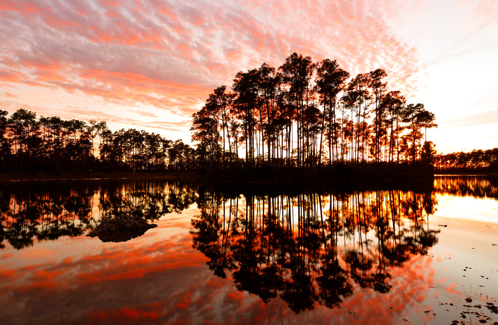 View of Long Pine Key Lake at Sunset in Everglades National Park Florida
