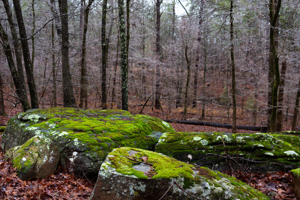 View of Mossy Rocks and Trees in Mount Magazine State Park Arkansas