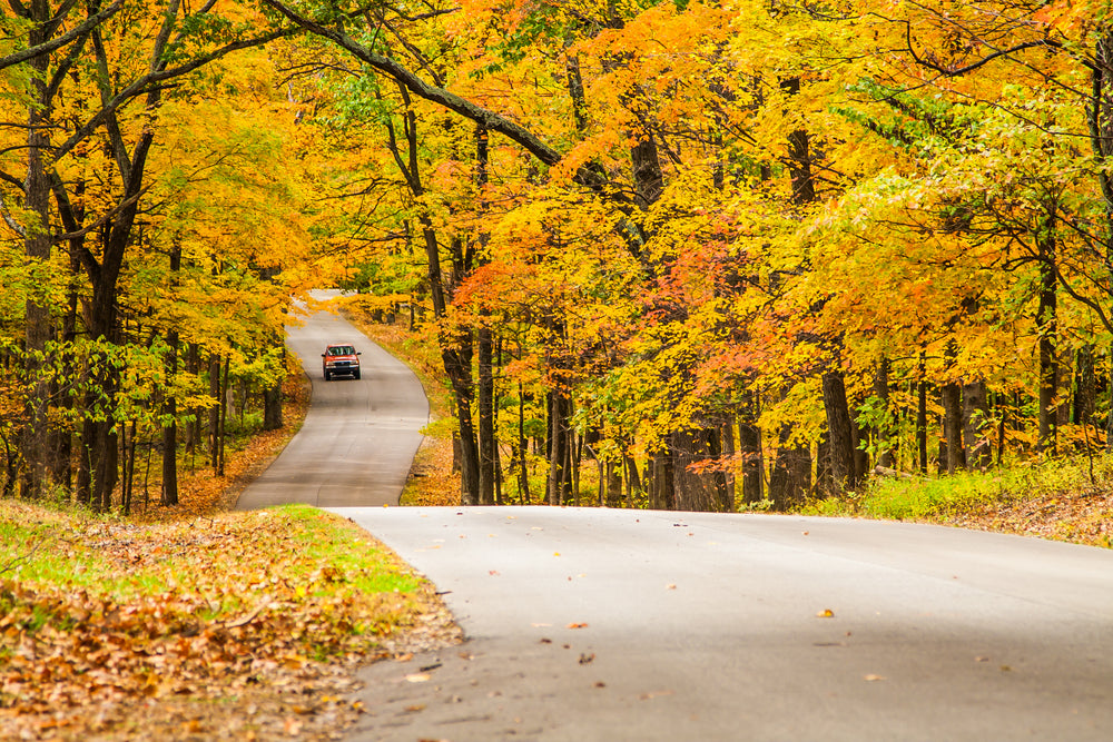 View of Road During Autum in Brown County State Park Indiana
