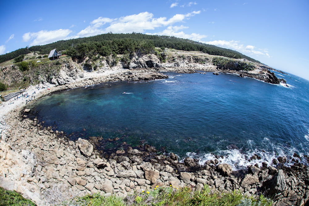 View of Salt Point State Park  Rugged Coastline in California