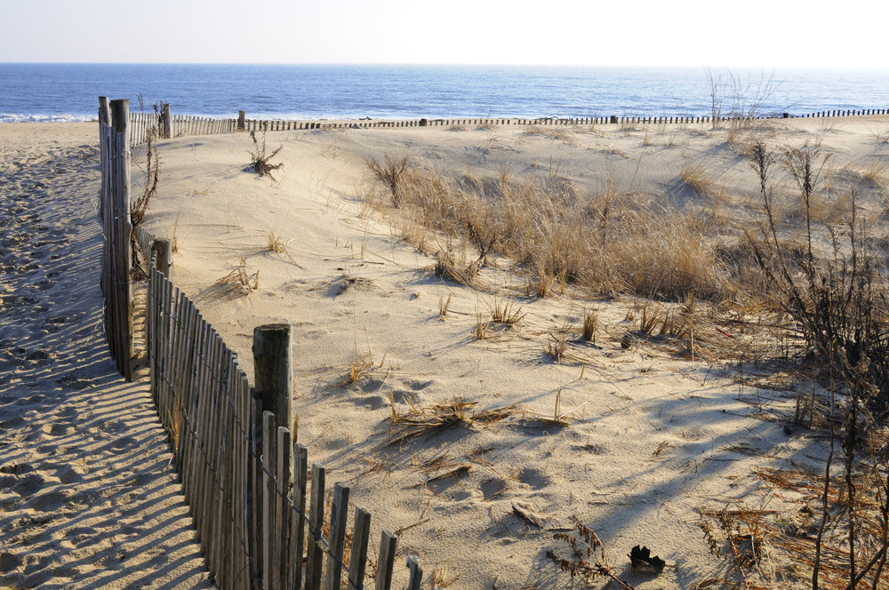 View of Sunny Beach Day Cape Henlopen State Park Delaware