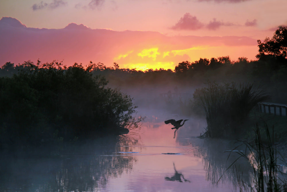 View of Sunrise Over Lake With Flying Heron in Everglades National Park Florida