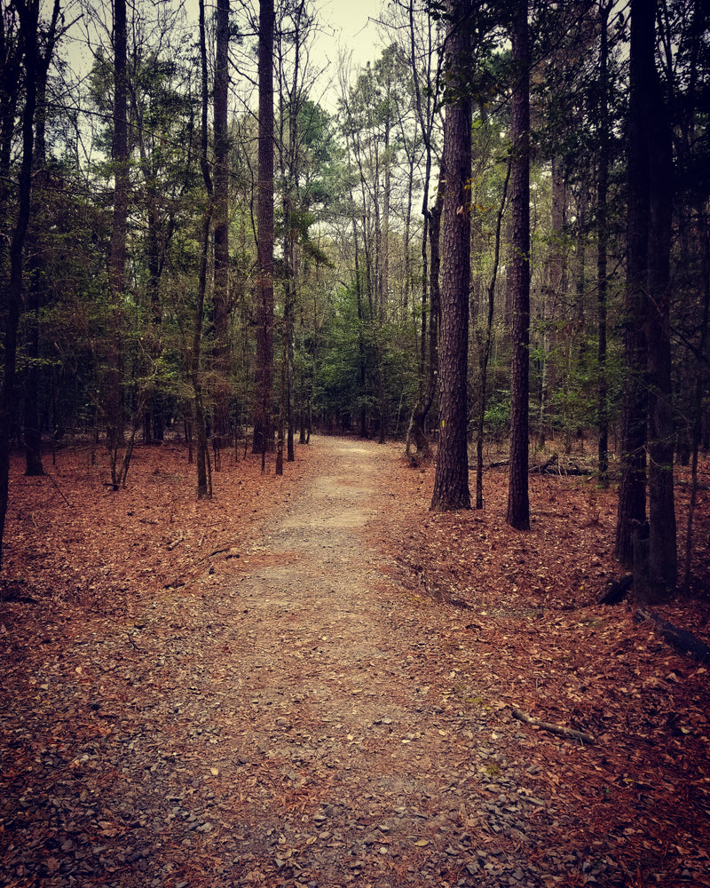 View of Trail on Autumn Day in Crater of Diamonds State Park Arkansas
