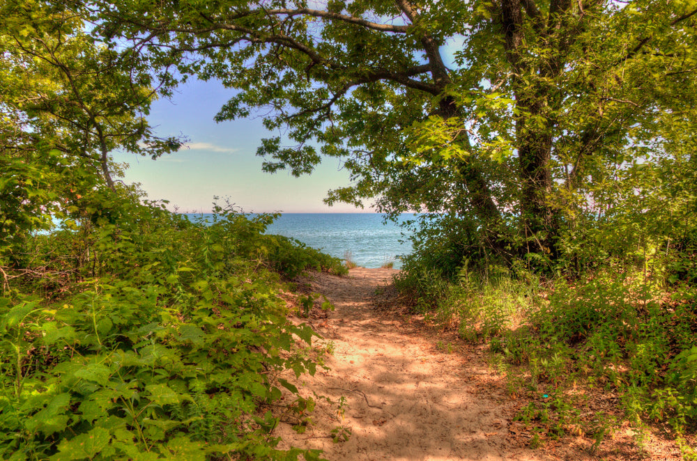 View of Trail on Sunny Day in Illinois Beach State Park