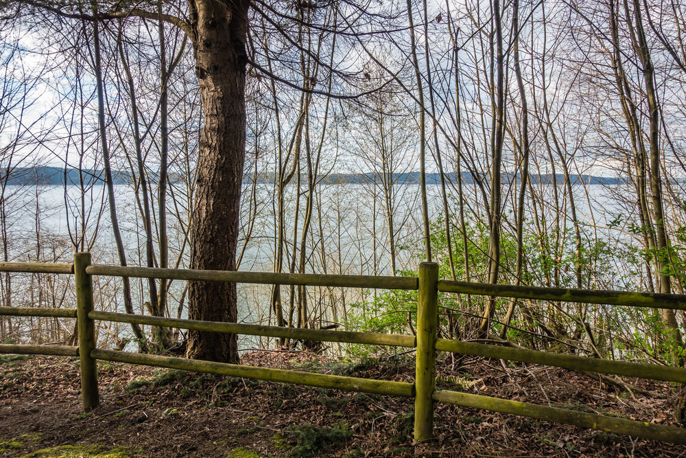 view-of-trees-in-front-fence-during-spring-dash-point-state-park