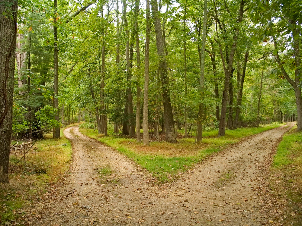 View of Two Hiking Trails Splitting From One Trail in Allaire State Park New Jersey