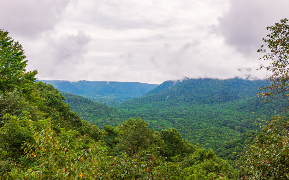 View of Lush Forest From Baughman Rock Overlook at Ohiopyle State Park Pennsylvania
