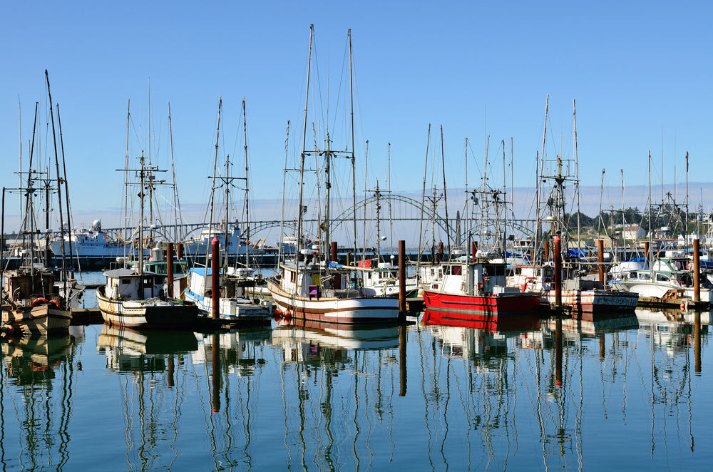 Waterfront Marina With Fishing Boats on a Sunny Day Newport Oregon