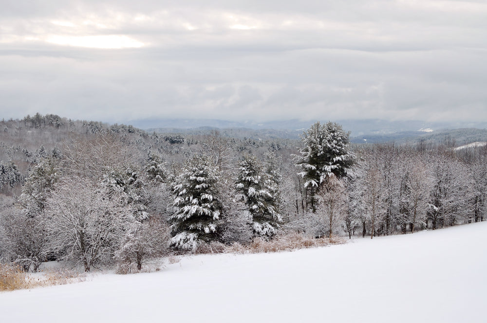 Winter View of Trees and Mountains in Danville Vermont