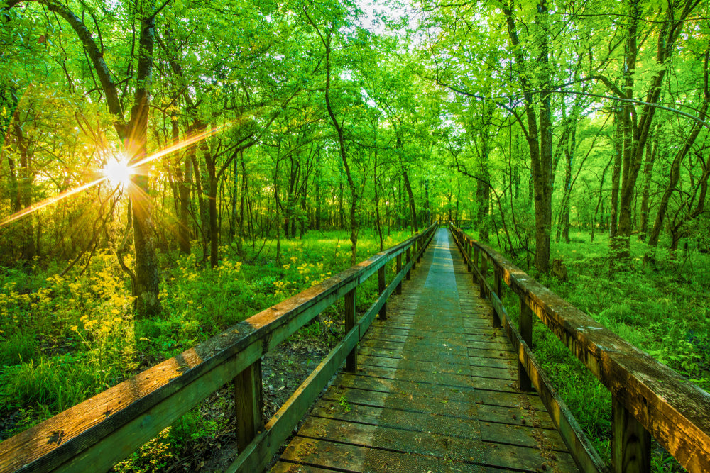 Wooden Pathway in Sunny Forest in Roosevelt State Park Mississippi