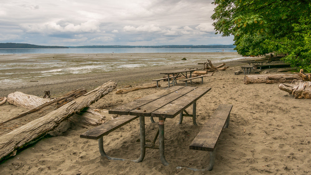 Wooden Picnic Bench on Beach with Fallen Tree Logs Surrounding Area Dash Point State Park