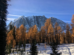 Larches up larches: Floe Lake, Numa Pass