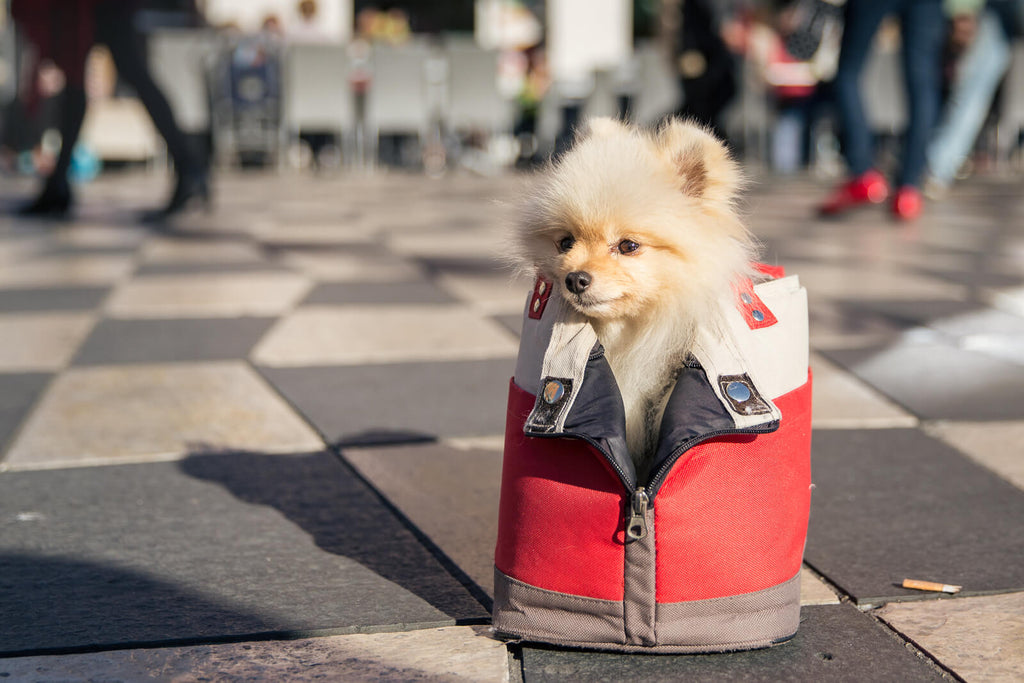 Dogs in Bags, Baskets, Bicycles and Baby Carriages