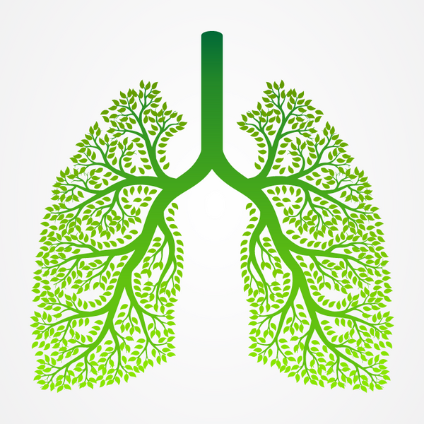 CBD Protects Lungs from COVID-19
