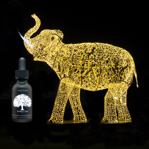 Elephants Benefit from CBD Too!