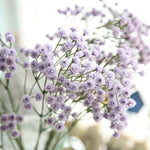 Load image into Gallery viewer, Baby's Breath