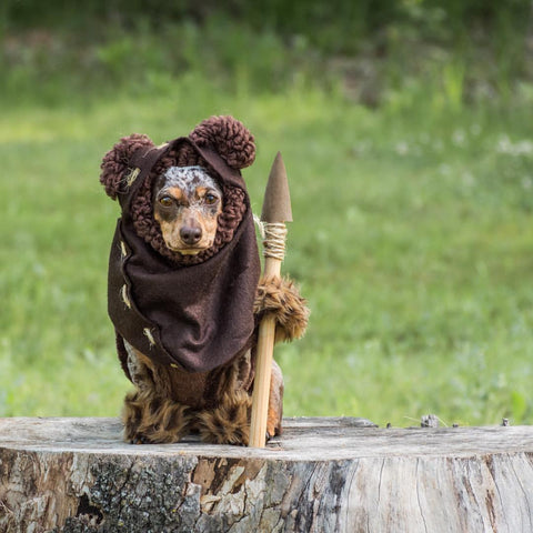 DottieDoxie as an Ewok.