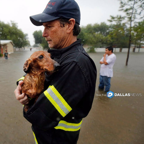 dachshund rescue Hurricane Harvey
