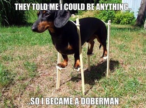 Dachshund on Stilts Meme