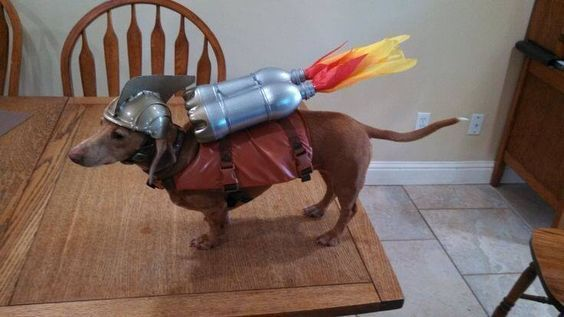Rocket ween costume for dachshund