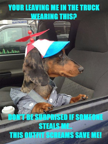 wiener dog in silly hat meme